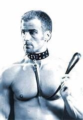 Halsband Dog, mit Nieten